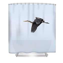 Shower Curtain featuring the photograph Great Blue Heron 2017-1 by Thomas Young