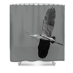 Shower Curtain featuring the photograph Great Blue Heron 2017-2 by Thomas Young