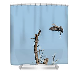 Shower Curtain featuring the photograph Great Blue Heron 2017-3 by Thomas Young