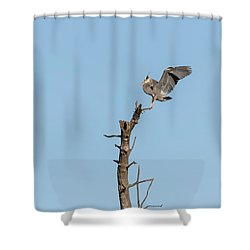 Shower Curtain featuring the photograph Great Blue Heron 2017-4 by Thomas Young