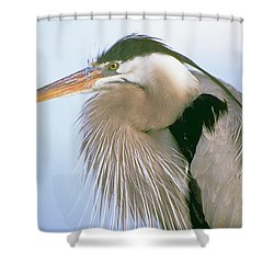Great Blue Heron 6 Shower Curtain