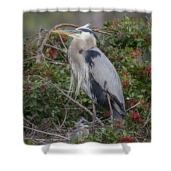 Great Blue Heron And Nestling Shower Curtain