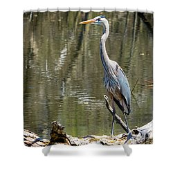 Shower Curtain featuring the photograph Great Blue Heron At Johnson Park by Ricky L Jones