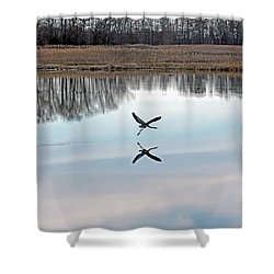 Great Blue Heron At Take-off Shower Curtain