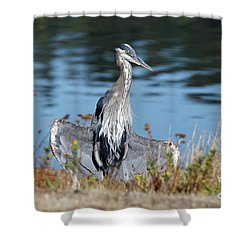 Great Blue Heron Cool Off Shower Curtain