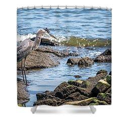 Great Blue Heron Fishing On The Chesapeake Bay Shower Curtain