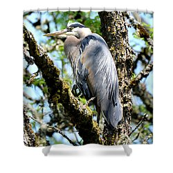 Great Blue Heron In A Tree Shower Curtain