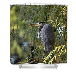Great Blue Heron In A Willow Tree Shower Curtain