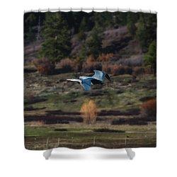 Great Blue Heron In Flight II Shower Curtain