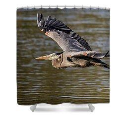 Great Blue Heron In Stratford Shower Curtain