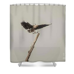 Shower Curtain featuring the photograph Great Blue Heron Landing by David Bearden