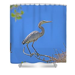 Great Blue Heron Nest Protector  Shower Curtain