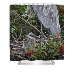 Great Blue Heron Nestling Shower Curtain