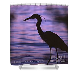 Great Blue Heron Photo Shower Curtain