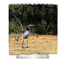 Shower Curtain featuring the photograph Great Blue Heron On Beach by Sheila Brown