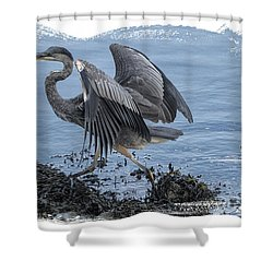 Great Blue Heron On Cape Cod Canal 1 Shower Curtain by Constantine Gregory
