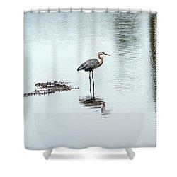 Great Blue Heron On Chesapeake Bay Pond Shower Curtain