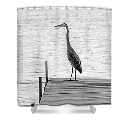 Great Blue Heron On Dock - Keuka Lake - Bw Shower Curtain