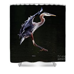 Great Blue Heron On The Wing Shower Curtain