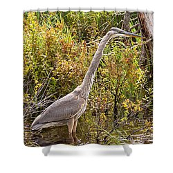 Shower Curtain featuring the photograph Great Blue Heron by Peter J Sucy