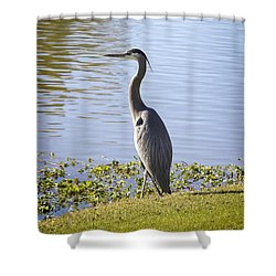 Shower Curtain featuring the photograph Great Blue Heron by Phyllis Denton
