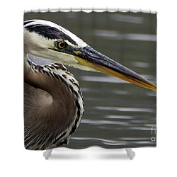 Great Blue Heron Portrait 2 Shower Curtain