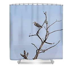 Shower Curtain featuring the photograph Great Blue Heron Presentation 2017-1  by Thomas Young
