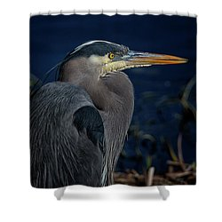 Shower Curtain featuring the photograph Great Blue Heron by Randy Hall