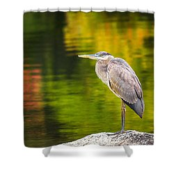 Shower Curtain featuring the photograph Great Blue Heron by Robert Clifford
