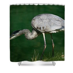 Great Blue Heron Series Shower Curtain