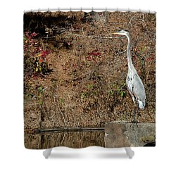 Shower Curtain featuring the photograph Great Blue Heron Standing Tall by George Randy Bass