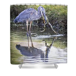 Great Blue Heron Vs Huge Frog Shower Curtain