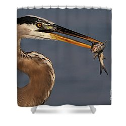 Great Blue Heron W/catfish Shower Curtain
