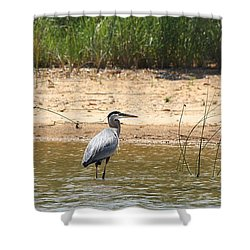 Shower Curtain featuring the photograph Great Blue Heron Wading by Sheila Brown