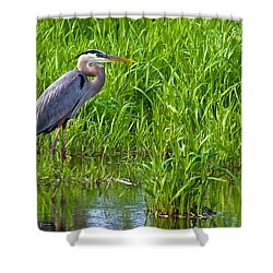 Great Blue Heron Waiting Shower Curtain