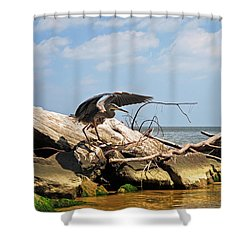 Great Blue Heron Wings Outstretched Shower Curtain by Rebecca Sherman