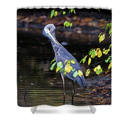 Great Blue Heron With An Itch Shower Curtain