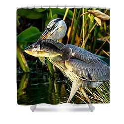 Great Blue Heron With Fish Shower Curtain