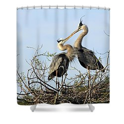 Great-blue Herons On Nest At The Venice Rookery, Florida Shower Curtain