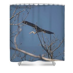 Shower Curtain featuring the photograph Great Blue In Flight by David Bearden