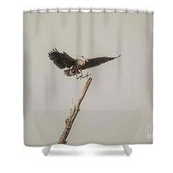 Shower Curtain featuring the photograph Great Blue Landing by David Bearden