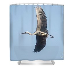 Shower Curtain featuring the photograph Great Blue On Final by David Bearden
