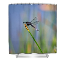 Great Blue Skimmer Shower Curtain by Brenda Bostic