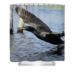 Great Cormorant Shower Curtain