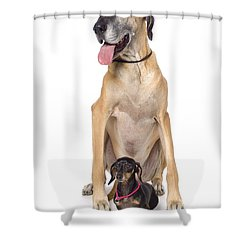 Great Dane And Dachshund Portrait Shower Curtain by Corey Hochachka