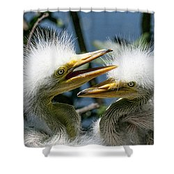 Great Egret Chicks Shower Curtain by Brian Tarr