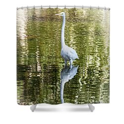 Shower Curtain featuring the photograph Great Egret by Daniel Hebard