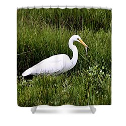 Shower Curtain featuring the photograph Great Egret by Debbie Stahre