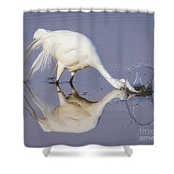 Great Egret Dipping For Food Shower Curtain