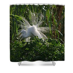 Great Egret Displays Windy Mating Plumage Shower Curtain